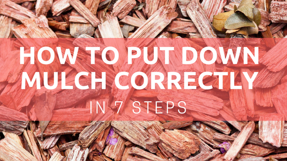 how to put down mulch
