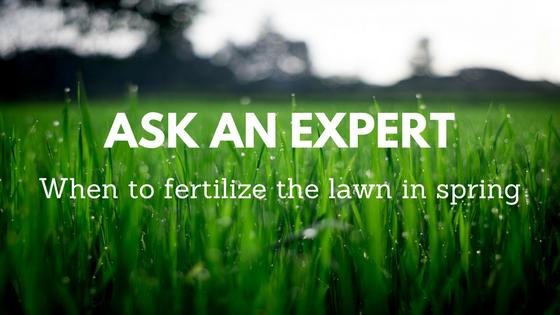 when to fertilize the lawn