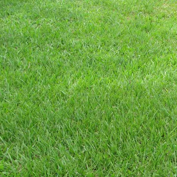 Bahia lawn service gainesville fl