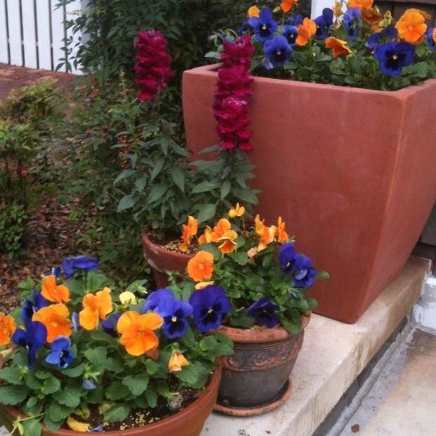 Spring Annuals - lawn service gainesville