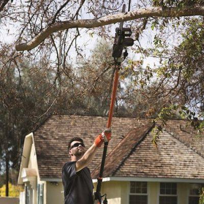 Palm Tree Pruning Gainesville FL
