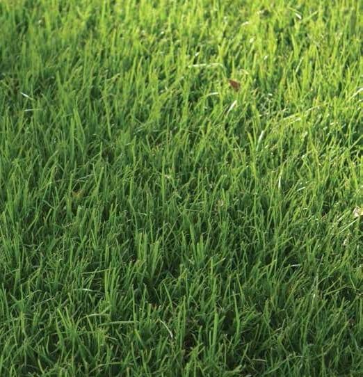 annual rye grass gainesville fl