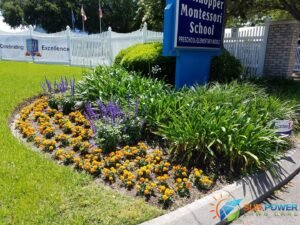Beautiful flowerbed with fresh new annual flowers