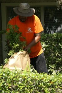 vine and weed removal to ensure a healthy lawn