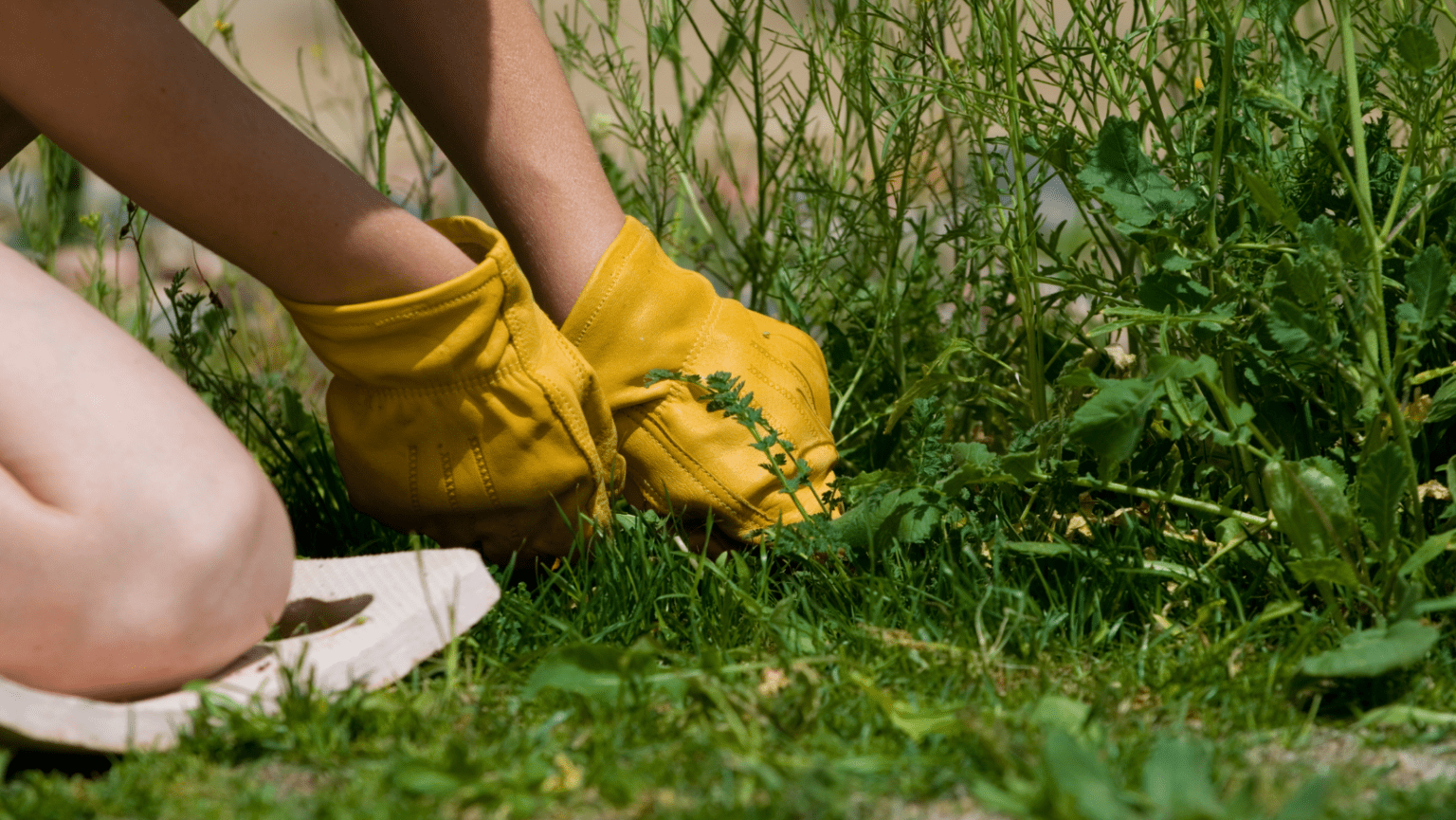 How to prep for spring lawn care