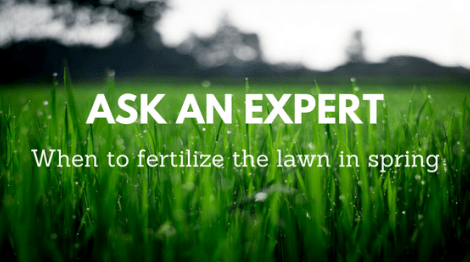 when to fertilize the lawn in north Florida