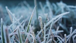 ready your lawn for winter